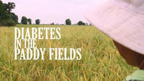 http://mopotsyo.org/wp-content/uploads/2018/09/DiabetesInPaddyField.jpg